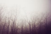 barren trees in a foggy forest