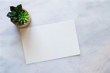 Potted succulent plant and blank paper on white marble desk