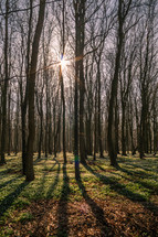 sunburst through bare trees in a forest