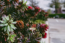 blossoms on a bush