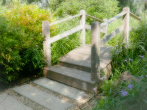 foot bridge and path through a garden