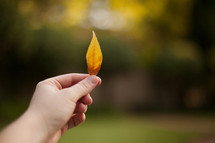 a person holding up a tiny yellow leaf