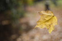 yellow falling leaf