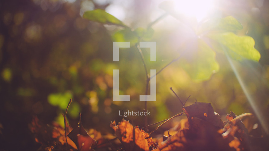 bright sunlight on a forest floor