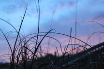 tall grass and pink and purple clouds