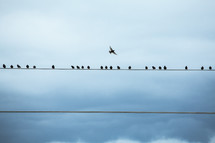 Birds perched on telephone lines with bird flying overhead.