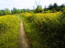 path through a summer field