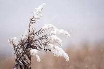 snow on dead plant leaves