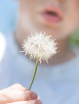 Boy about to blow a dandelion seed head