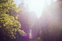 intense sunlight in an evergreen mountain forest