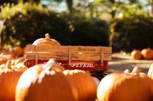 orange pumpkins in a pumpkin patch and wagon