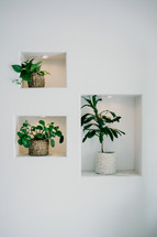 potted plants in wall cutouts