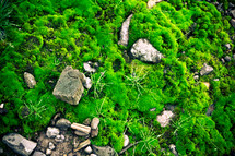 moss growing over stones