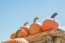 Pumpkins on a table with bright blue sky behind