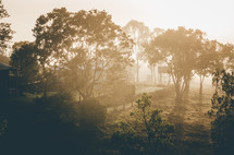 The early morning sun shines through the fog in this country Australian scene