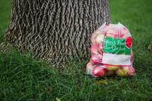 Apples in a bag under a tree