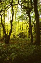 An overgrown forest