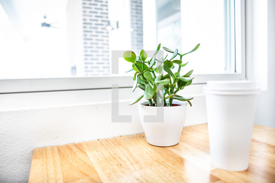 potted plant and coffee cup on a table by a window