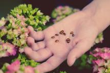 child's hand holding ladybugs