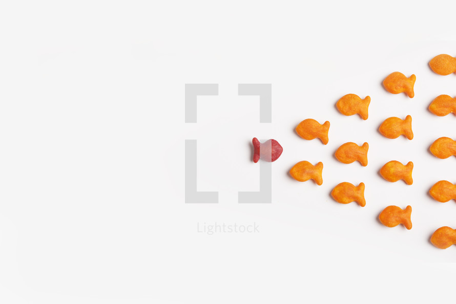 goldfish - swimming in the opposite direction