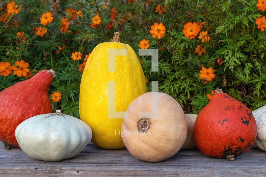 autumn gourds