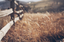 fence line and tall grasses