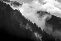 mountain forest in the clouds