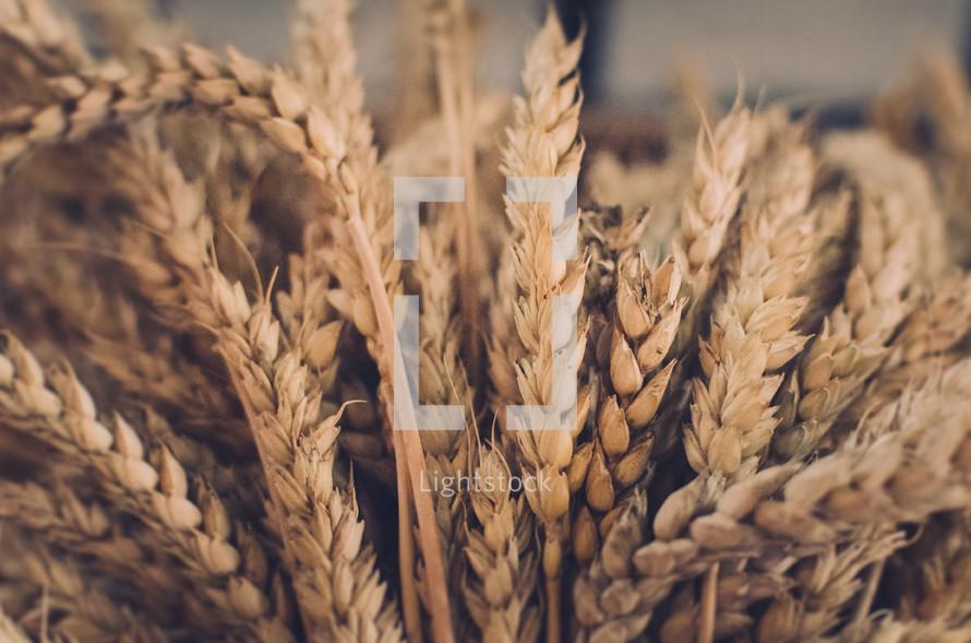 a sheaf of wheat