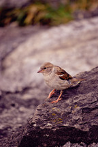 bird on a rock