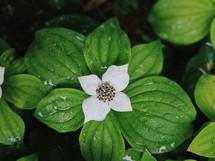 rain drops on a flower