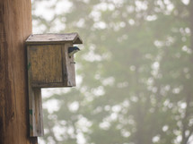 bird in a birdhouse