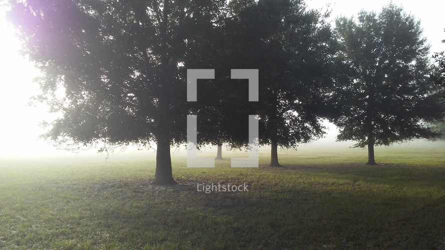 A misty shroud of fog surrounds a row of trees out in the countryside lit by a morning sunrise that lights up and warms the earth around this beautiful and open green grassy meadow in the countryside.