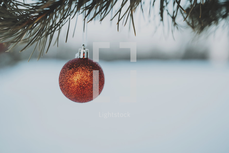 single red ornament hanging on a branch