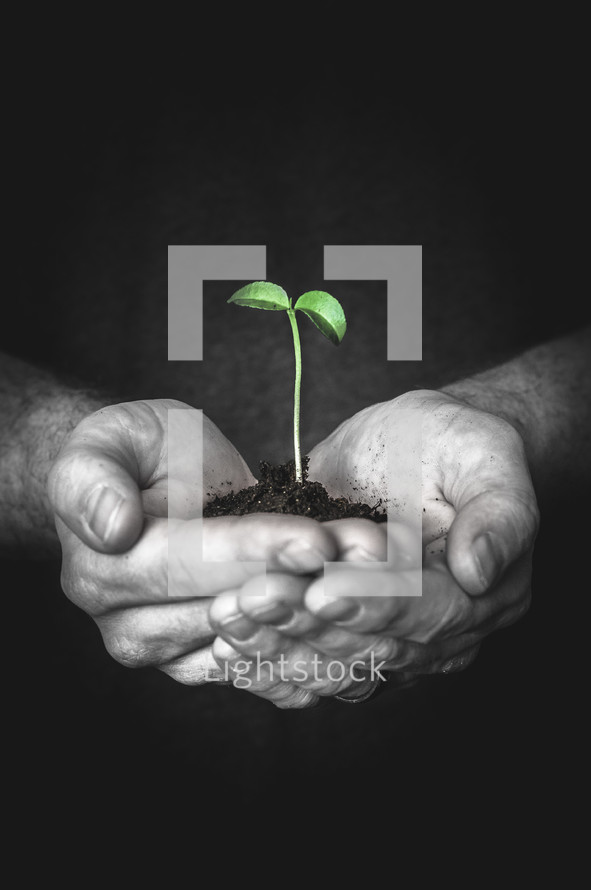 hands holding a sprout in dirt