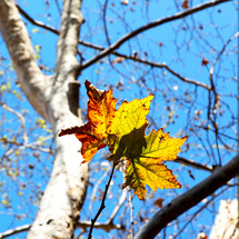 fall leaf on a tree