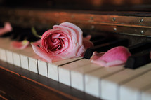 close up of rose and keys on our piano keyboard