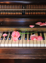 broken rose on our old piano