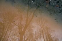 shadow of trees in a puddle