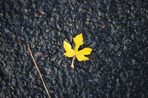 wet fall leaf on asphalt
