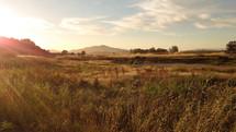 sunlight over a field