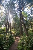 Sun beaming onto a dirt trail through lofty trees.