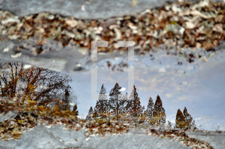 reflection of trees in a forest in a puddle
