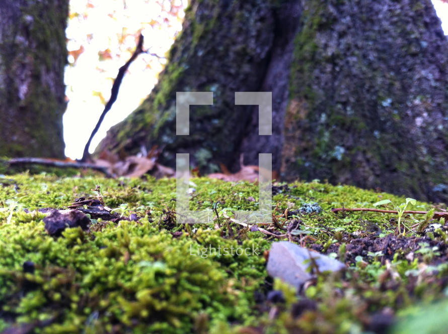 moss covered forest floor