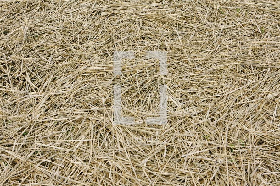 bunch of straw