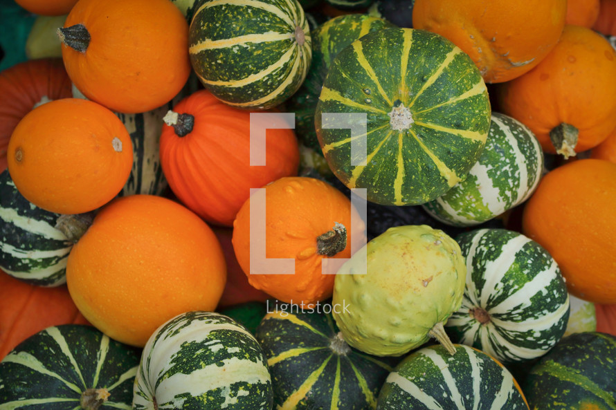 Seasonal Pumpkin and Squash Collage
