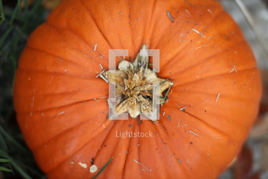 Top of a pumpkin.