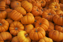 pile of small pumpkins