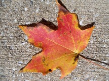 A fallen leaf found on the ground orange red in color showing the fall colors in the mountains of Asheville, North Carolina.