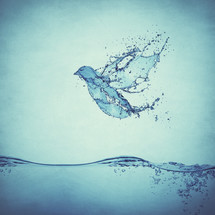a dove composited using drops and splashes of water - illustrating the Holy Spirit and baptism