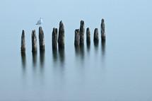 seagull on a stump